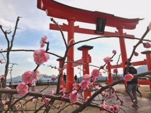toriie3