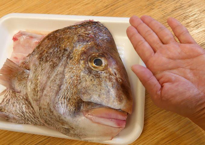 ごっつい鯛は鱗もごつい‼