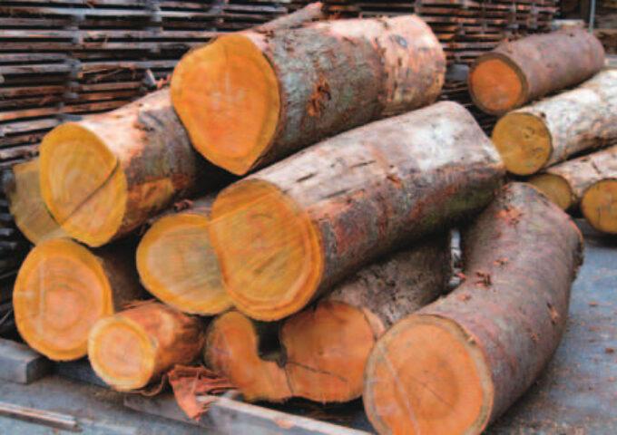 木造住宅・森林浴