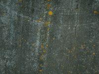 texture1123p841_TP_V4